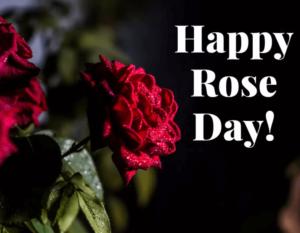 Happy Rose Day Beautiful