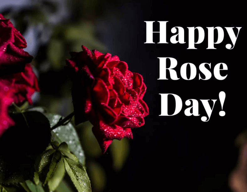 Happy Rose Day Beautiful